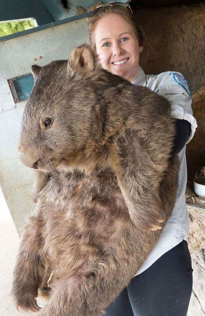 Animals Are Way Bigger Than We Think (Photos) 23