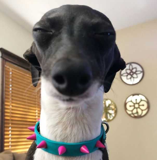 This Dog Is Gaining The Internet Because Of Its Delicious Human Expressions