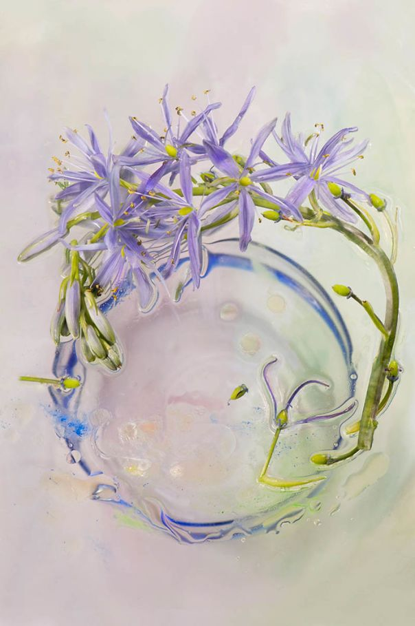 Highly Commended, 'Camassia After The Rain' By Marie Phelan