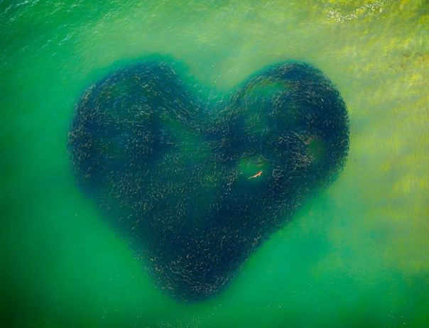 Photo Of The Year: Love Heart Of Nature