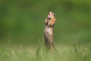 Comedy-Wildlife-Photography-Contest-2020-Finalist