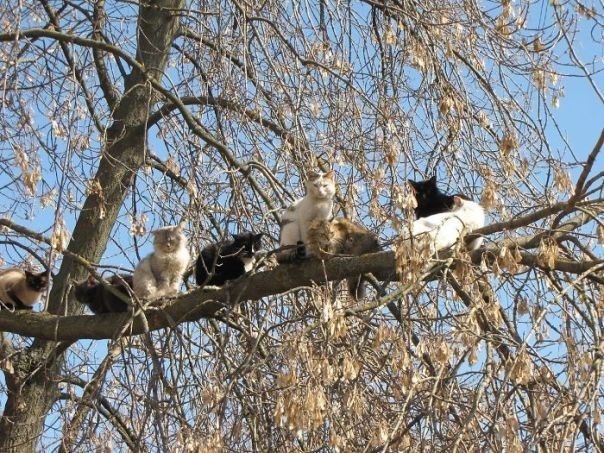 Cats-Raised-By-Birds