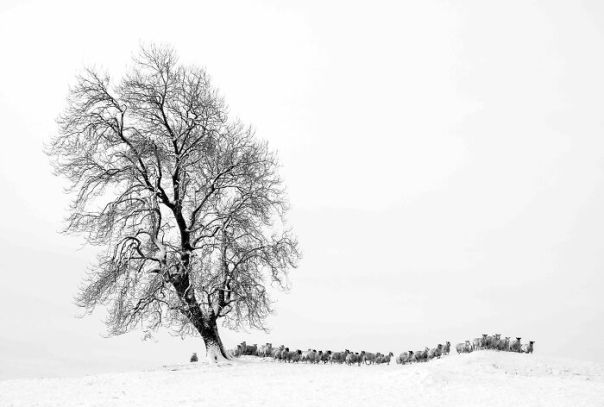 Black And White Commended: David Kidwell, 'Tree In Stythwaite Meadow', Cumbria