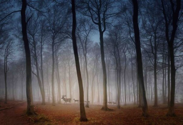 Your View Commended: Peter North, 'Deer In Dawn Mist', Hertfordshire