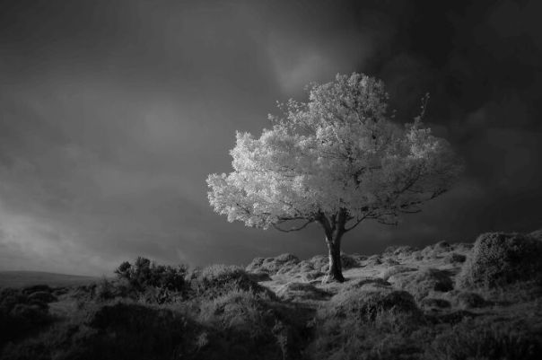 Black And White Winner: Neil Burnell, 'Fantasy', Devon