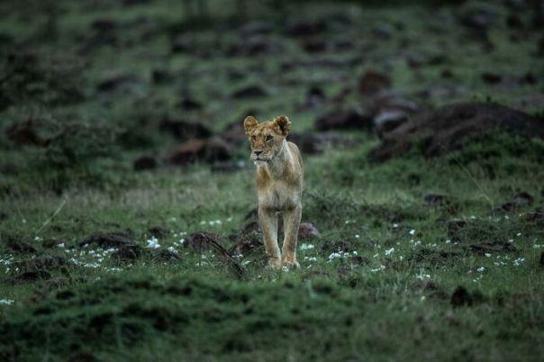 Wildlife-Photographer-Family-Overcome-Challenge