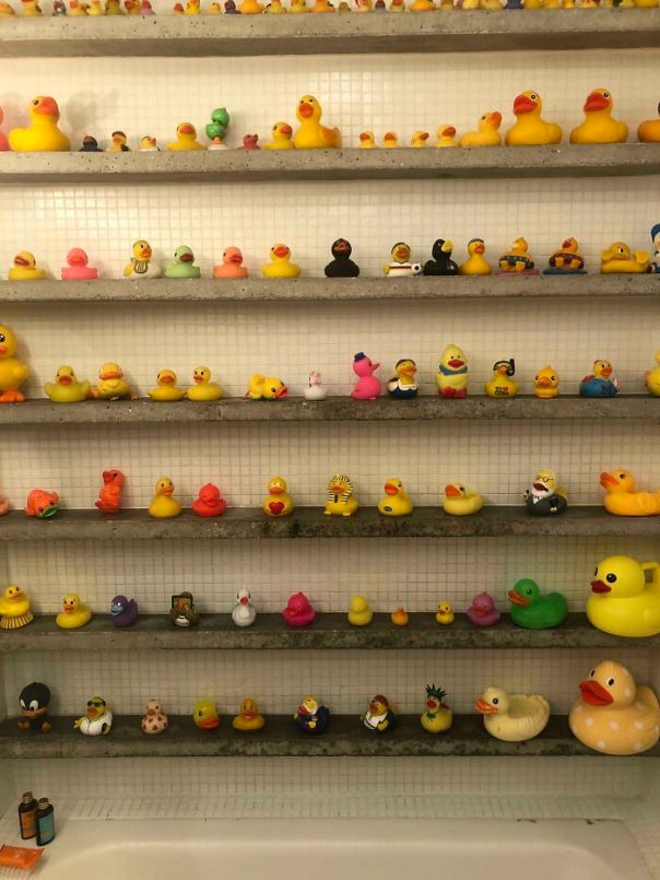The Airbnb That I'm Staying In Has A Collection Of Rubber Ducks In The Bathroom Wall