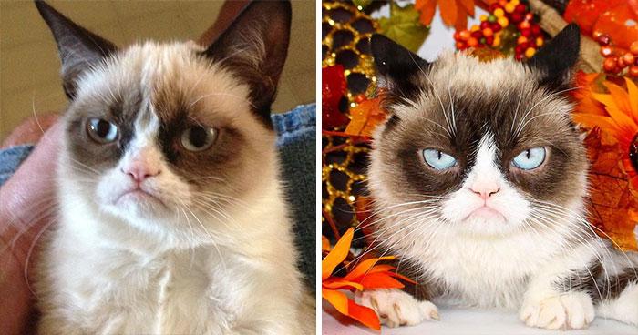Grumpy Cat (Tardar Sauce)