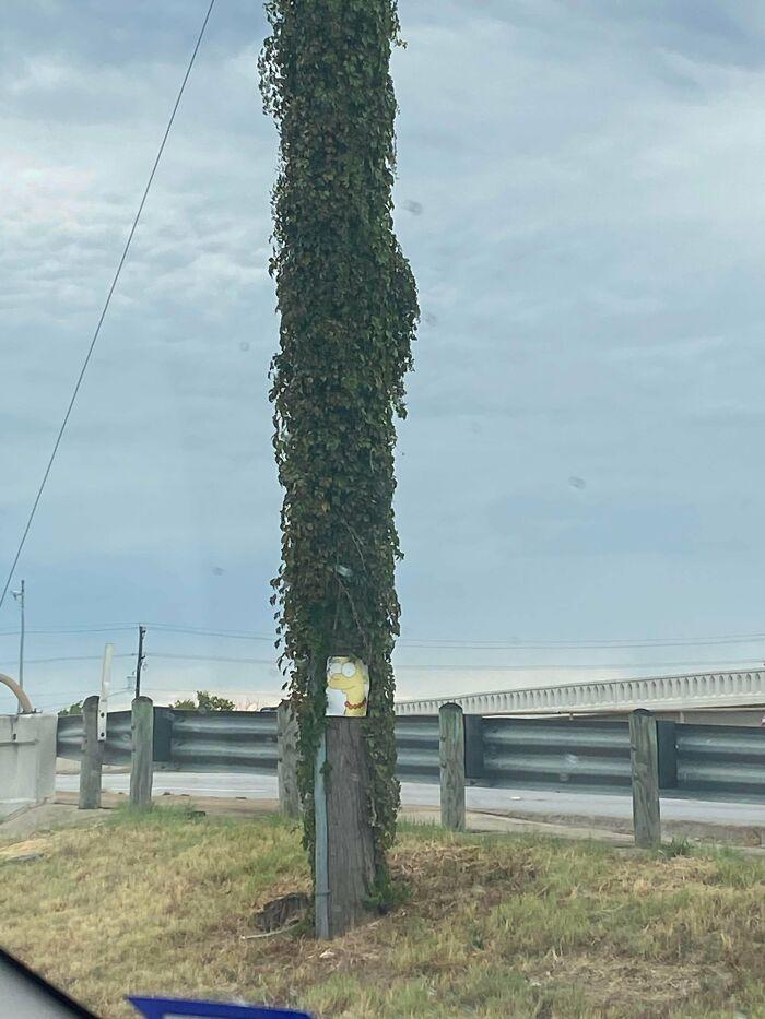 This Pole I Found