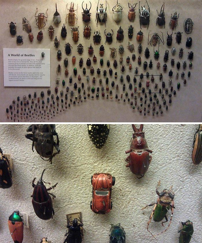 Ha. Beetle