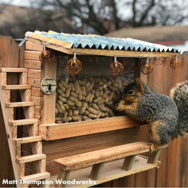 I Made A Squirrel Bar