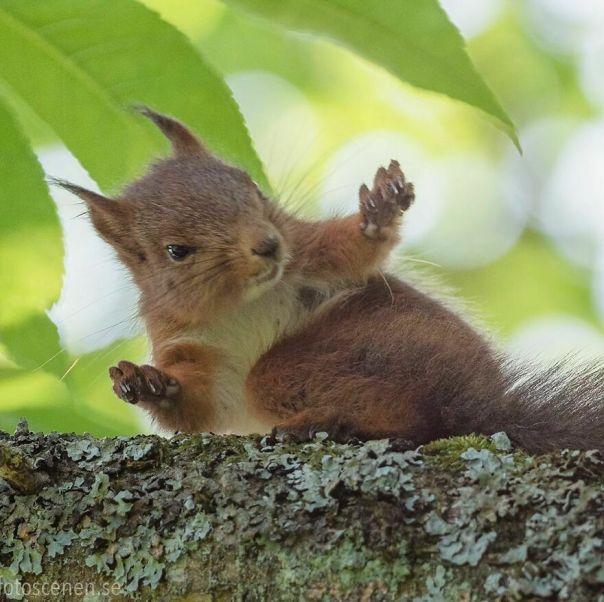 Tall Squirrel Tales