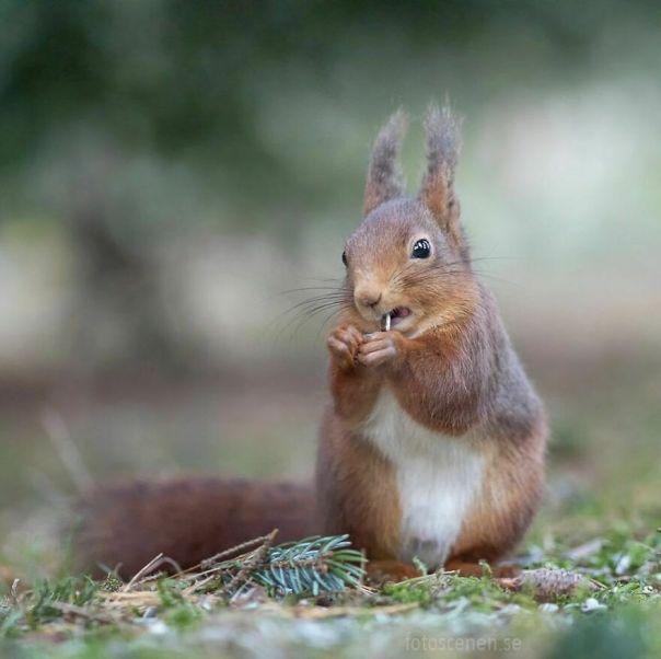 Squirrel Appreciation Day, You Say?