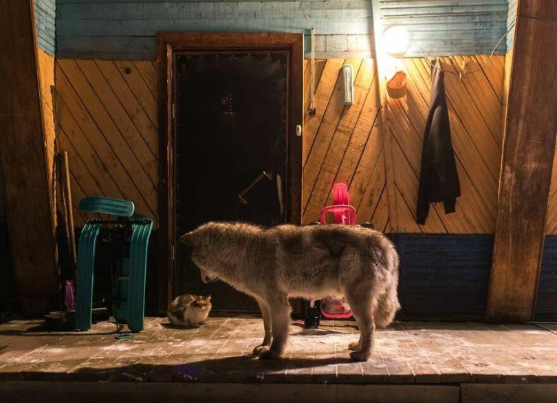 Photographer Alexey Vasiliev shows the daily life of Russias coldest region 6037557b95934  880 - Qual a menor temperatura já registrada na Terra?