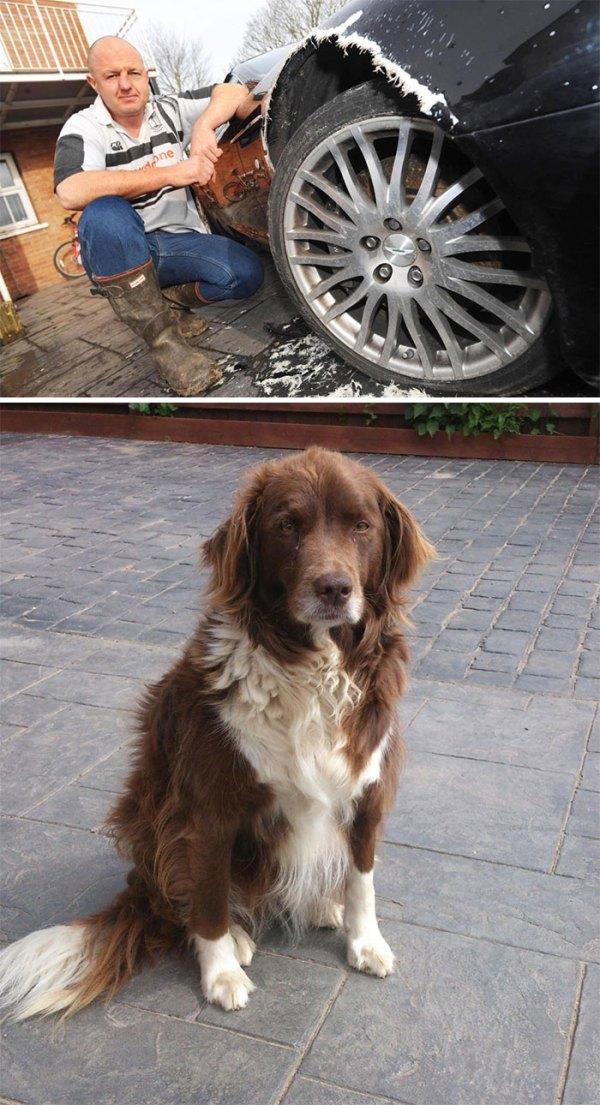 Dog Chews £80,000 Aston Martin