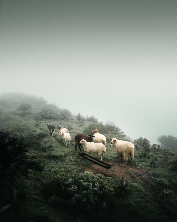 Greece Winner: 'Foggy Farming', By Thoedoros Apeiranthitis