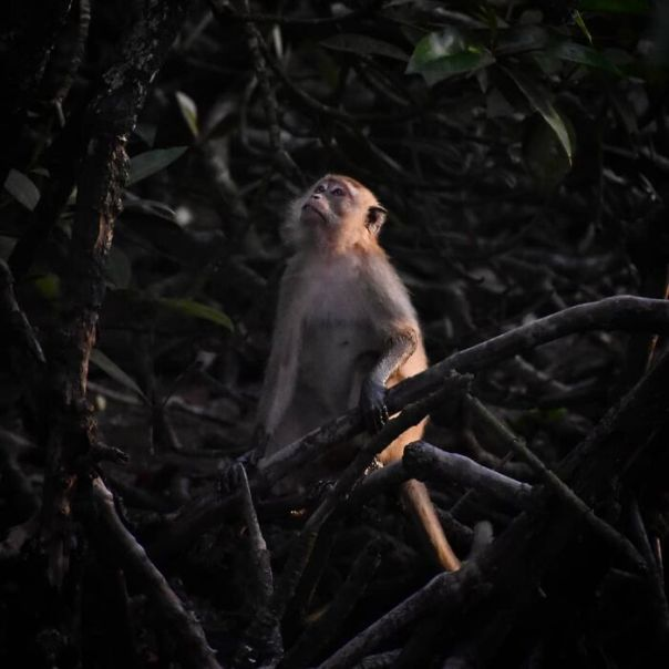 Malaysia Winner: 'Long-Tailed Macaque', By Yoganathan Yoke