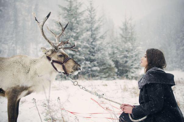 Reindeer's Story