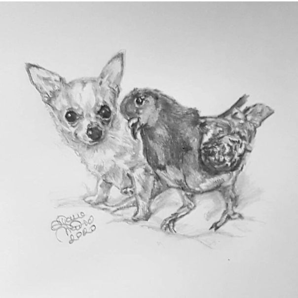 Herman The Pidgeon And Lundy The Dog: @themiafoundation