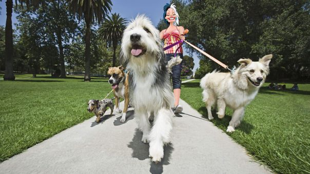 How Many Walks You Had With Your Dog?