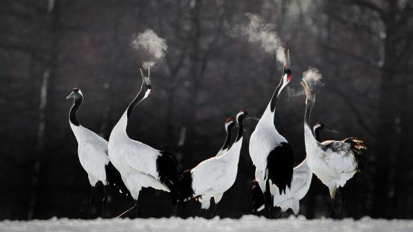 Red-Crowned Crane By Li Ying Lou