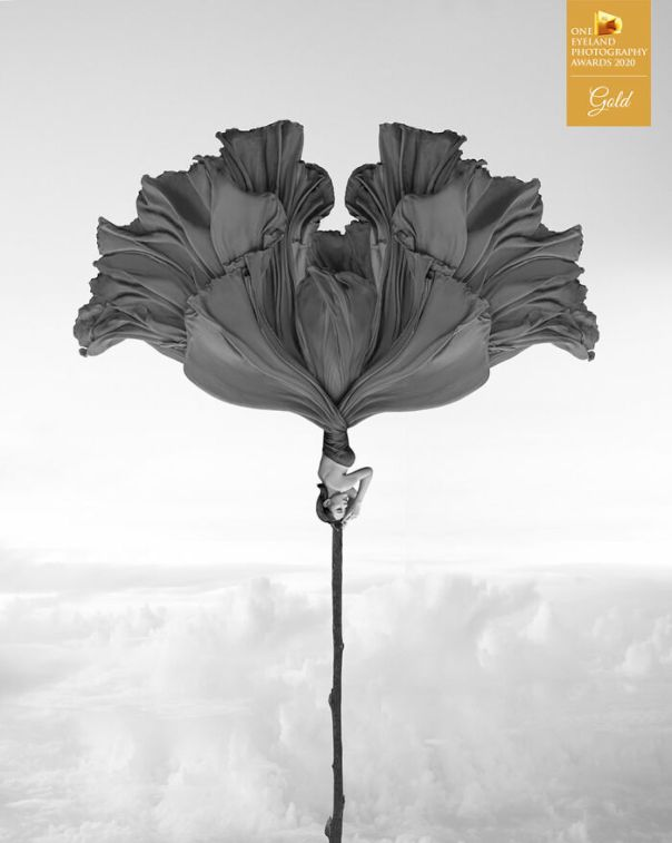 Two Sided Windflower By Kenneth Lam. Gold In Fine Art