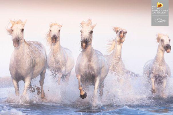 Legendary Horses By Davide Giannetti. Silver In Nature