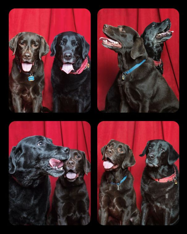 Dogs-In-Photo-Booth-Lynn-Terry