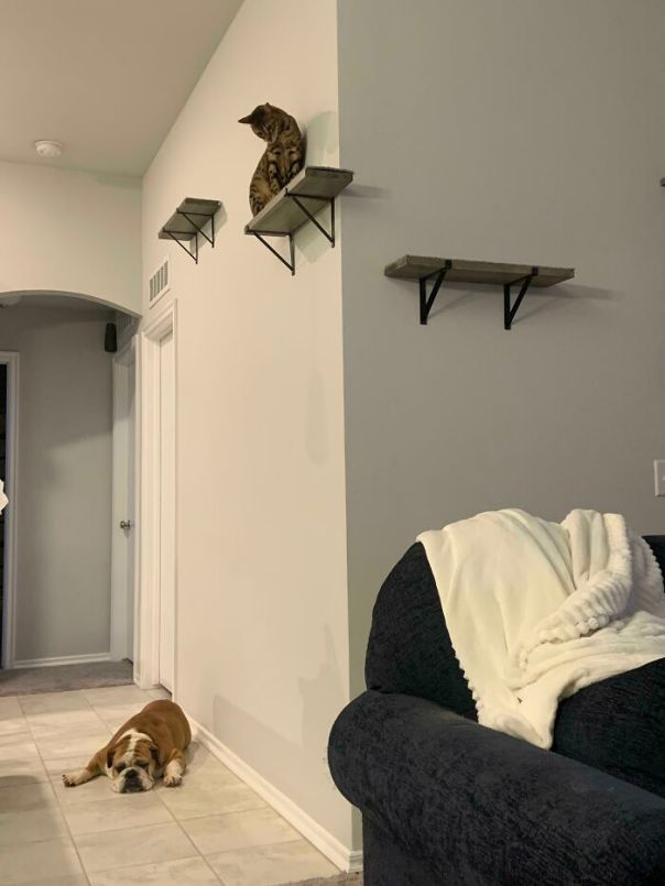 We Adopted A Bulldog Yesterday The Cat Clearly Was Not Excited About It