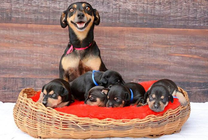 The Happiest Mother