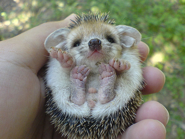 30 cute baby animals