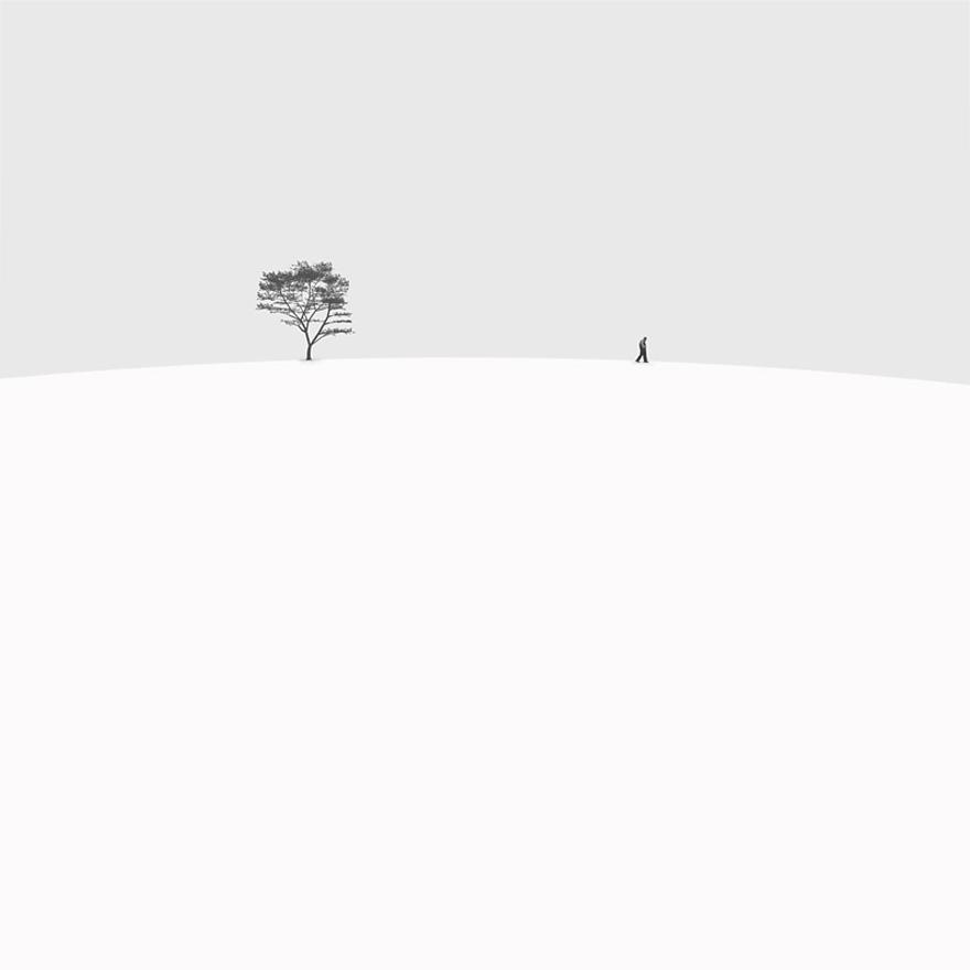 Tree White Bare Life Black And