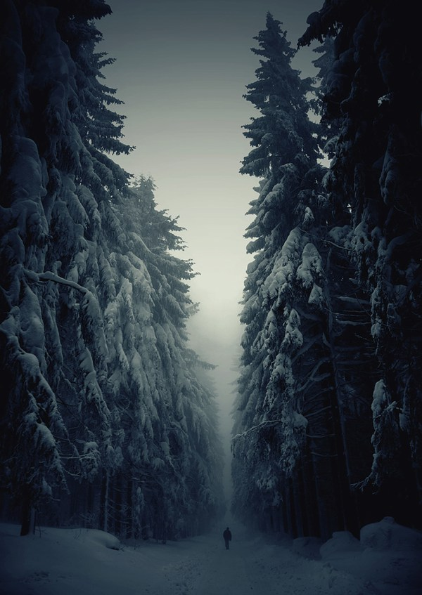 Cool Winter Forest