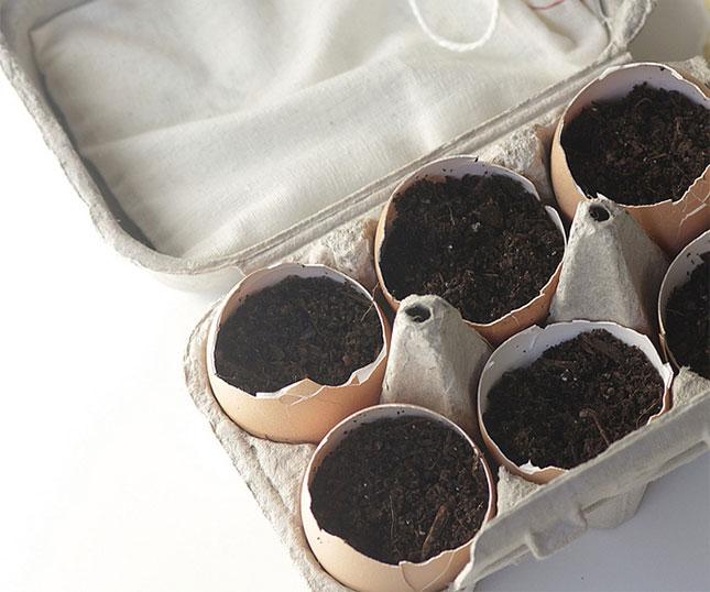 Mini giardino con gusci di uova