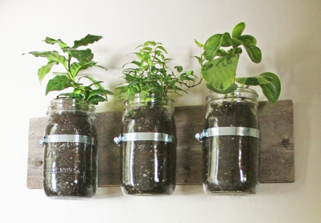 I classici barattoli alimentari in vetro, detti anche barattoli da muratore, sono perfetti per ospitare piccole erbe aromatiche