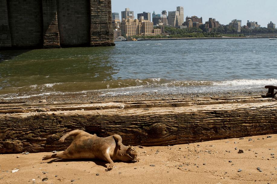 La ciudad de Nueva York Departamento de Parques de Nueva York, dijo a los animales que el cadáver era espantoso de aspecto