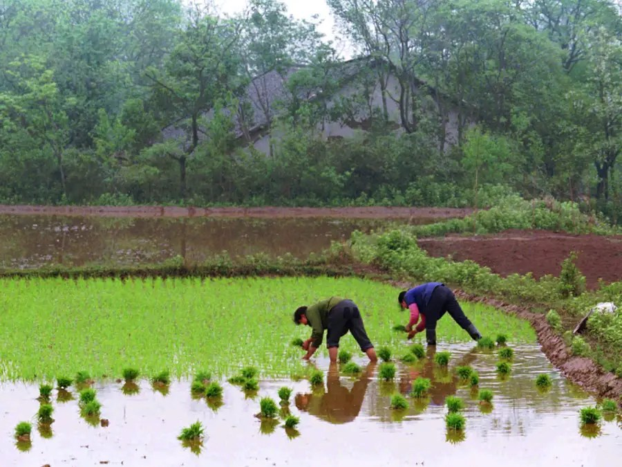 In 2006, China abolished its agricultural tax to help ease the financial burden on farmers.