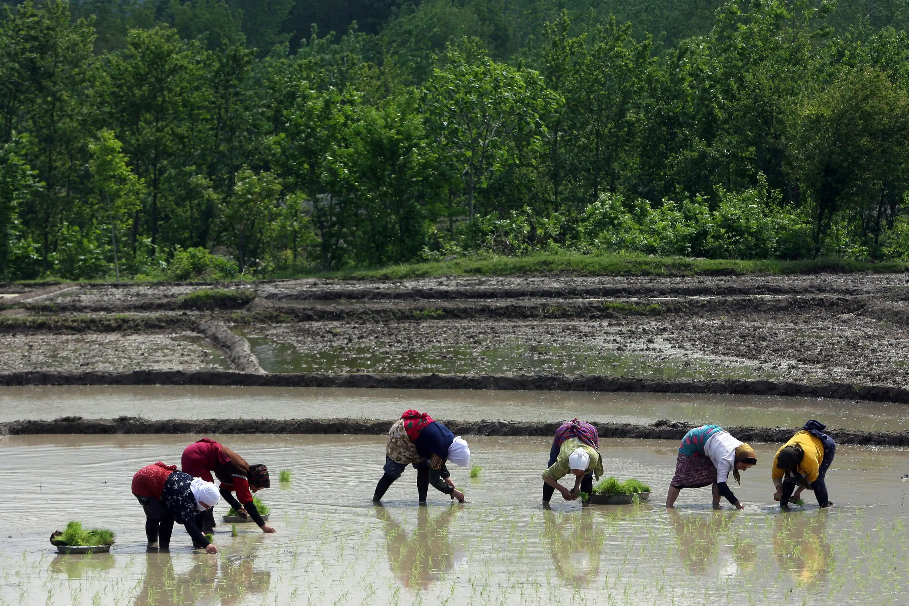 But expectations are that as the Chinese economy develops that its agricultural workforce will account for less than 10 percent of its total workforce.
