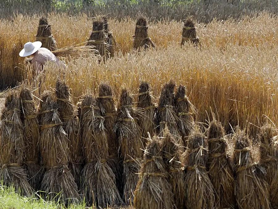 Экономический рост Китая был обусловлен миграцией рабочей силы из сельской местности.