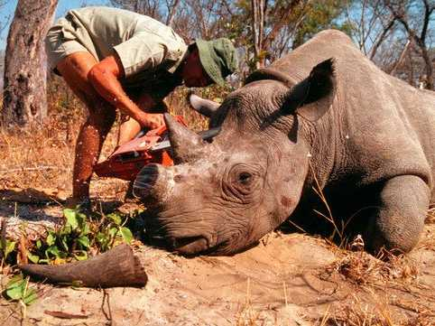 Image result for indian rhino hunting