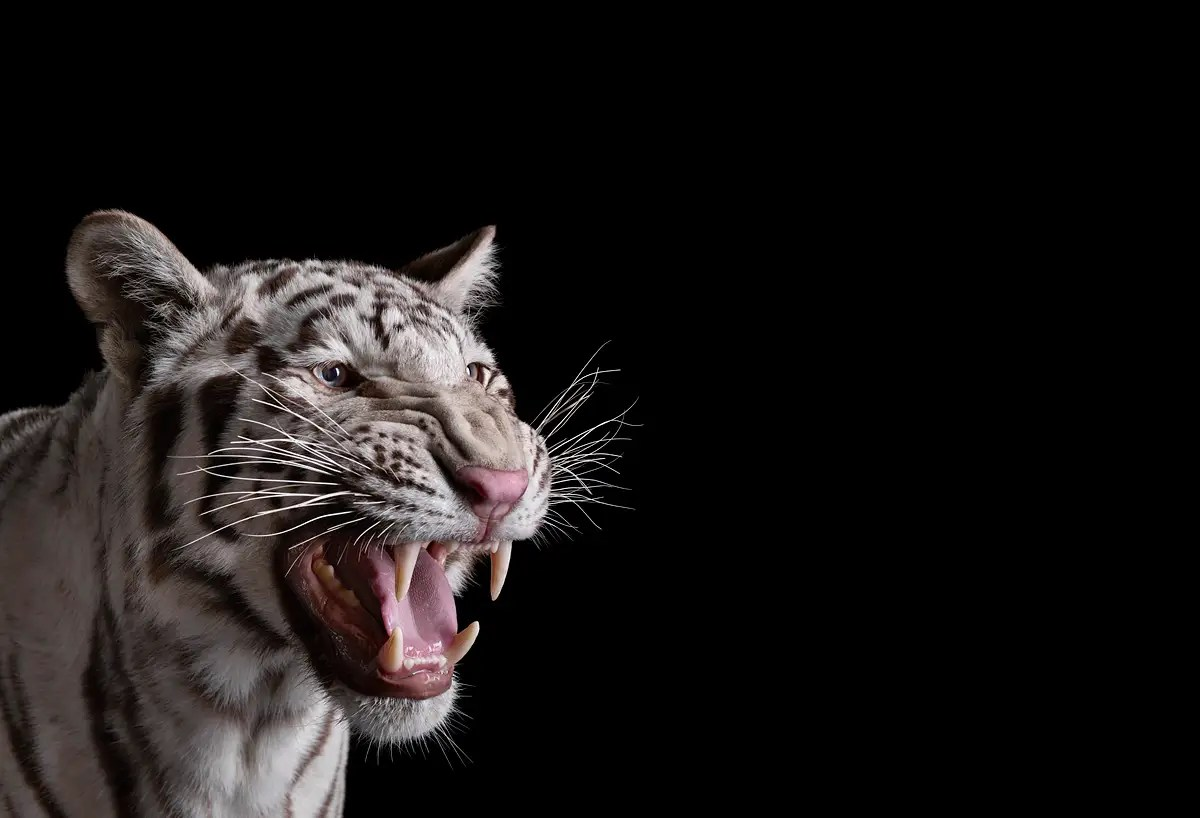 Wallpapers Fofo Cutes 15 Stunning Portraits Of Wild Animals Closer Than You Ve