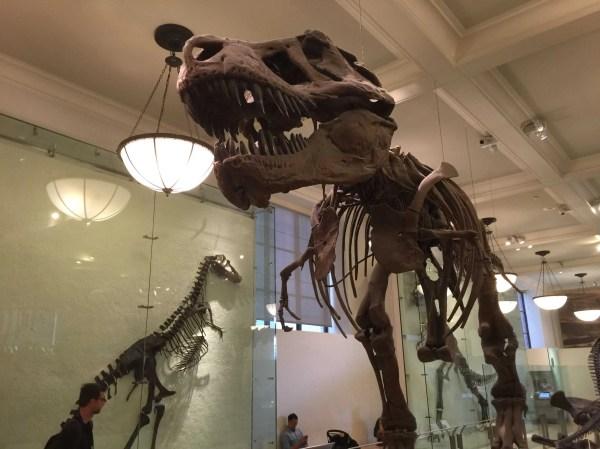 Fire Breaks In Dinosaur Exhibit Museum Of