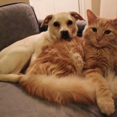 Best Sofa For Cats Owners Leather Legs 5 Reasons Life Is Better Cat People Business Insider