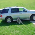 2005 mercury mountaineer 4 dr std awd suv picture exterior