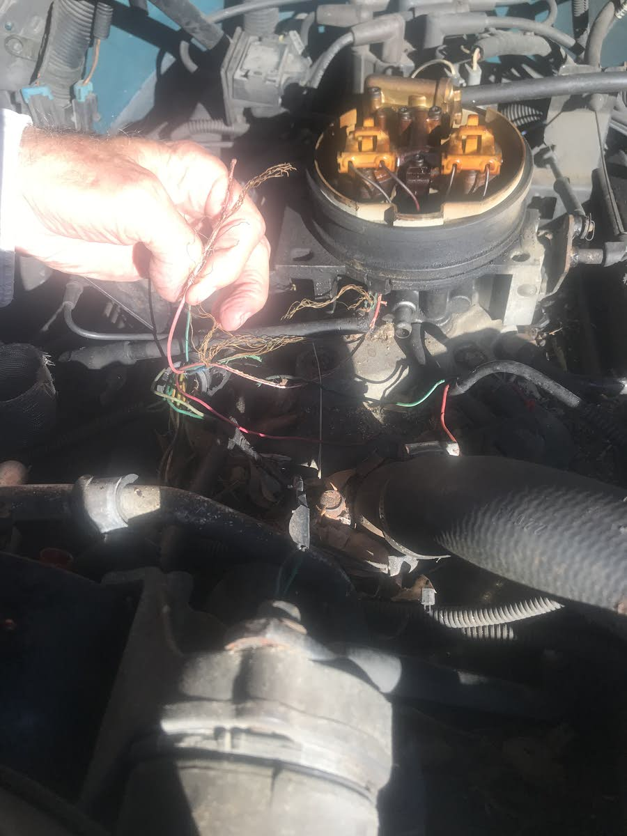 medium resolution of 1995 wiring harness rodent damage