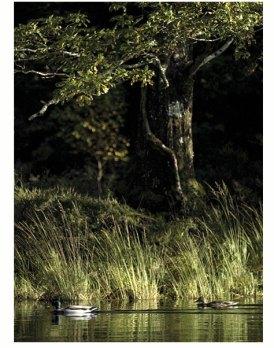 IRELAND captured by Luke Massey