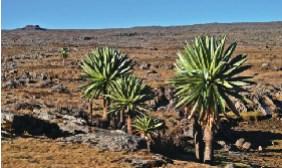 Bale Mountains National Park Tour