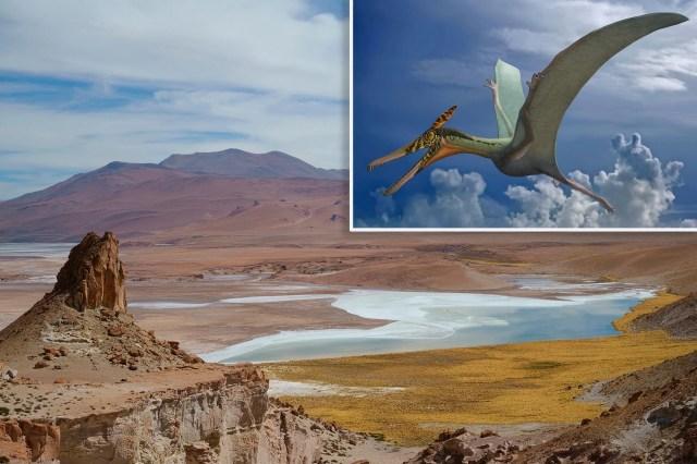 flying-dragon-hp.webp