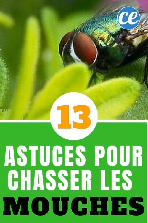 Lutter Contre Les Mouches : lutter, contre, mouches, Astuces, Naturelles, Chasser, Mouches, Définitivement.