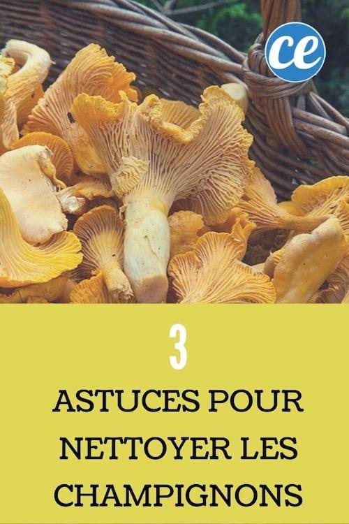 Comment Nettoyer Les Champignons Pieds Bleus : comment, nettoyer, champignons, pieds, bleus, Comment, Nettoyer, Champignons, Astuces, Efficaces.